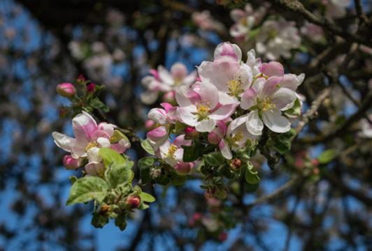 """Töötlemata originaalpilt """"Vanaisa õunapuu otsas"""" │© Arma.ee"""